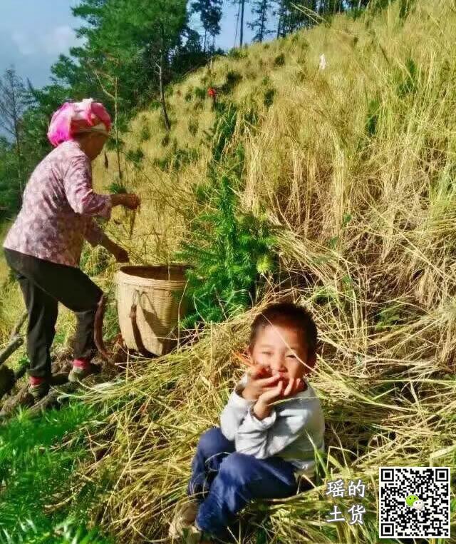金秀岭禾米